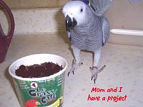 1, Bird And Parrot Info