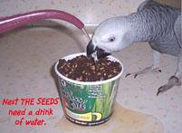10, Bird And Parrot Info