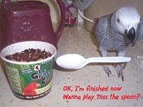 11, Bird And Parrot Info