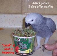 12, Bird And Parrot Info