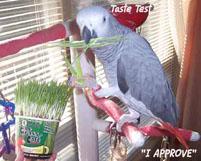 13, Bird And Parrot Info