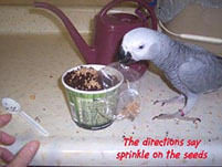 2, Bird And Parrot Info