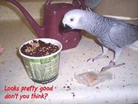 3, Bird And Parrot Info