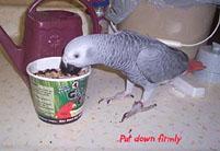 4, Bird And Parrot Info