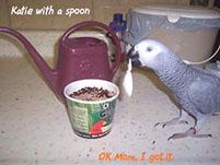 5, Bird And Parrot Info
