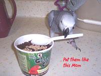 6, Bird And Parrot Info