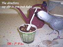 7, Bird And Parrot Info