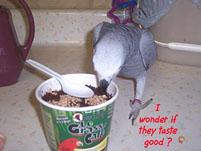 8, Bird And Parrot Info