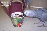 9, Bird And Parrot Info